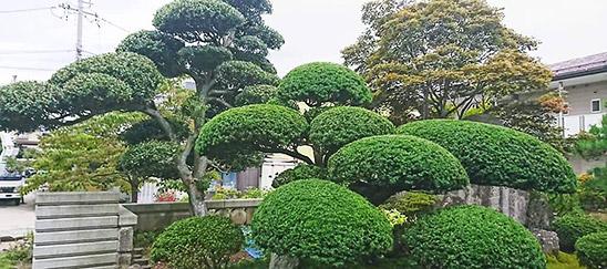 長野市で造園業者に依頼をお考えなら