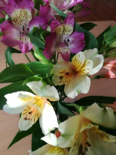 アルストロメリア 花のある暮らし