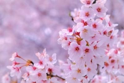 春です~(*´ω`*)