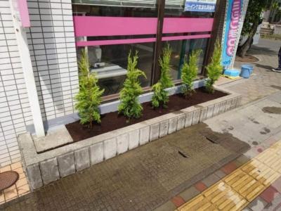長野市 コニファー植栽